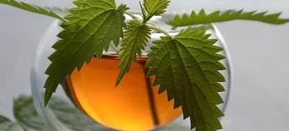 علاج رائحة الفم الكريهة نهائيا بالشاي الأخضر