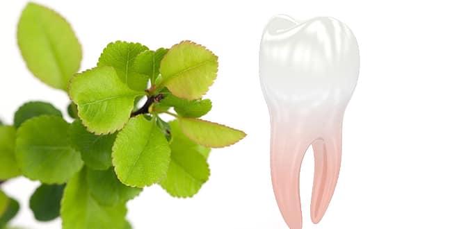 علاج الم الاسنان بالاعشاب الطبيعية